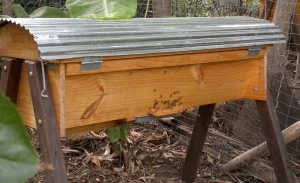 Brisbane Backyard Bees